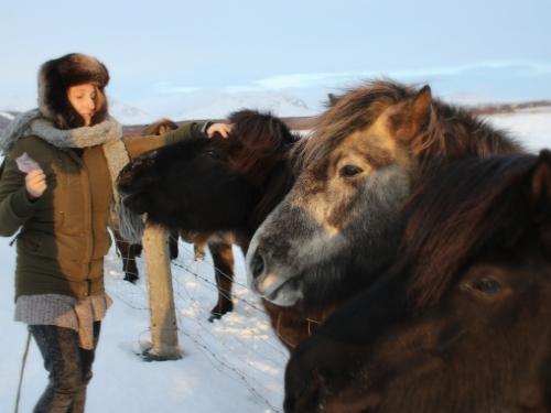 Kuce islandzkie, momentami aż zbyt przyjazne :)